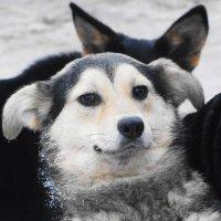 приют для собак :: Михаил Жуковский