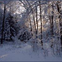 Зимний лес :: Надежда Лаврова