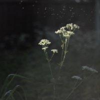 А воздух- нежный, пряный, чистый… :: Ирина Данилова