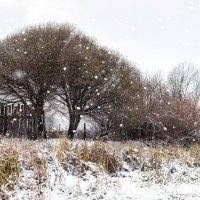 Снегопад :: Николай
