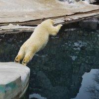 медведи учатся летать :: Алексей Никитин