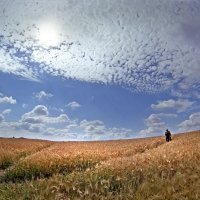 Тропинки в поле :: Валерий Талашов