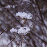 Зимняя сныть :: Aнна Зарубина