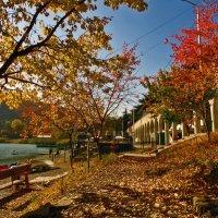 Осенняя краса :: Наталья Джикидзе (Берёзина)