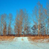 зима :: Василий Платонов