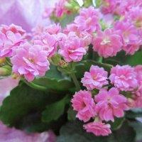Розовый на розовом. :: Ирина