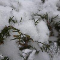 Первый снег :: Юрий Щербаков