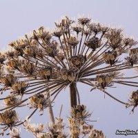 Зимние цветы :: Виктор Бондаренко
