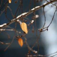 Зимние листья... :: Марина Соколова