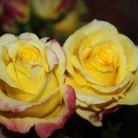 Жёлтые розы :: Людмила
