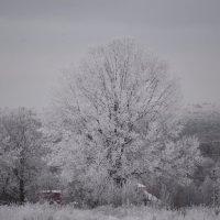 Зима пришла :: Ольга Кунцман