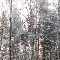 заколдованный лес :: Александр Швец