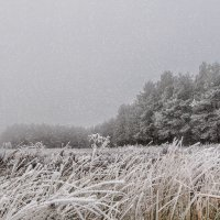 Первый день зимы. 01.12.2014. 02. :: Анатолий Клепешнёв