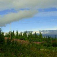 Лето на Ямале :: Tata Wolf