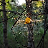 И вроде паутина, но всё же- хороша! :: Ирина Данилова