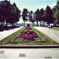 Городские цветы (8). :: Владимир Валов