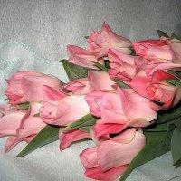 Tulips Miss Elegance :: laana laadas