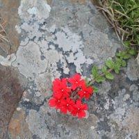 каменный цветок :: нина полянская