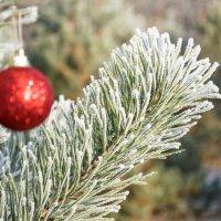 Скоро Новый год) :: Yuliya Kalinovskaya