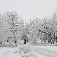 Принакрыло всё, припорошило снегом белым... :: Вика К.