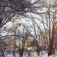 Зимняя речка в лучах заката :: Валерий Бочкарев
