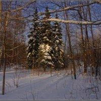 06,Ноябрь :: Владимир Холодный