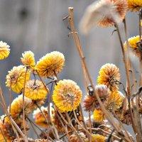 Сухоцветики зимние :: galina tihonova