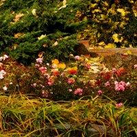 Розы в осени :: Наталья Джикидзе (Берёзина)