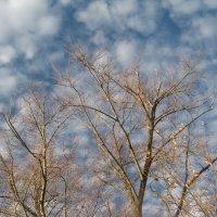 Зимнее небо :: Джулия К.
