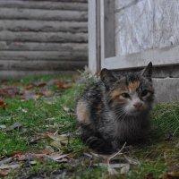 душевые и кошек :: İsmail Arda arda