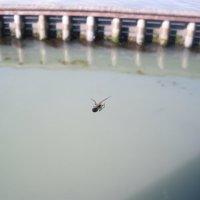 паук в Венеции) :: Ольга Богачёва