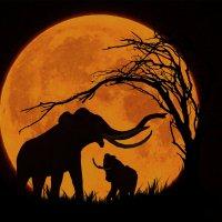 Слоны (из серии ночные силуэты)... :: олег