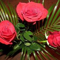 розы :: Татьяна Осипова(Deni2048)