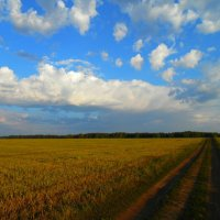Раскинулось поле :: Tanya Sukhomlinova