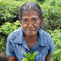 Цейлонский чай. :: Edward J.Berelet
