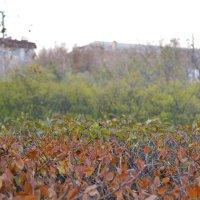 Осенняя листва :: Маргарита Орловская