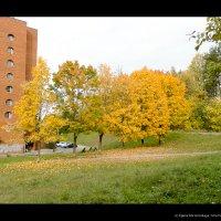Осенняя прогулка :: Egeny Korovinskaya