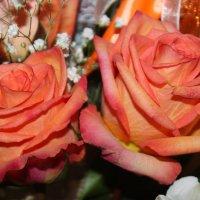Розы :: Людмила
