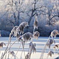 Однажды зимой... :: Валерия Комова