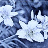 Казалось, только одна его песня и неслась над садом... :: Ирина Данилова