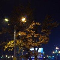 Дерево в вечернем освещении :: Дмитрий Зубенин