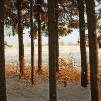 По краю леса :: Валерий Талашов