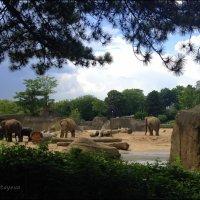 Азиатские слоны. :: Anna Gornostayeva