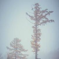 Туман :: Леонид Баландин