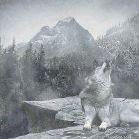 волк на утесе :: Елена