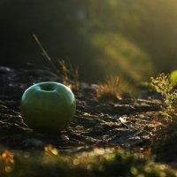 Fairy Apple :: Карен Ирицян