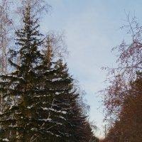 Зимний день :: Алексей Масалов