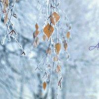 Декабрь :: Сашенька)