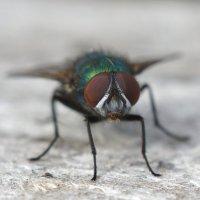 Просто муха! :: Александр Смирнов