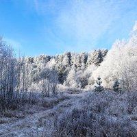 Лесная зимняя тропинка Вела всё дальше в гущу леса... :: Анатолий Клепешнёв